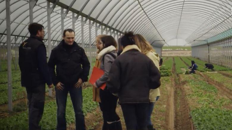Visite sociétaire producteur salade C'est qui le patron