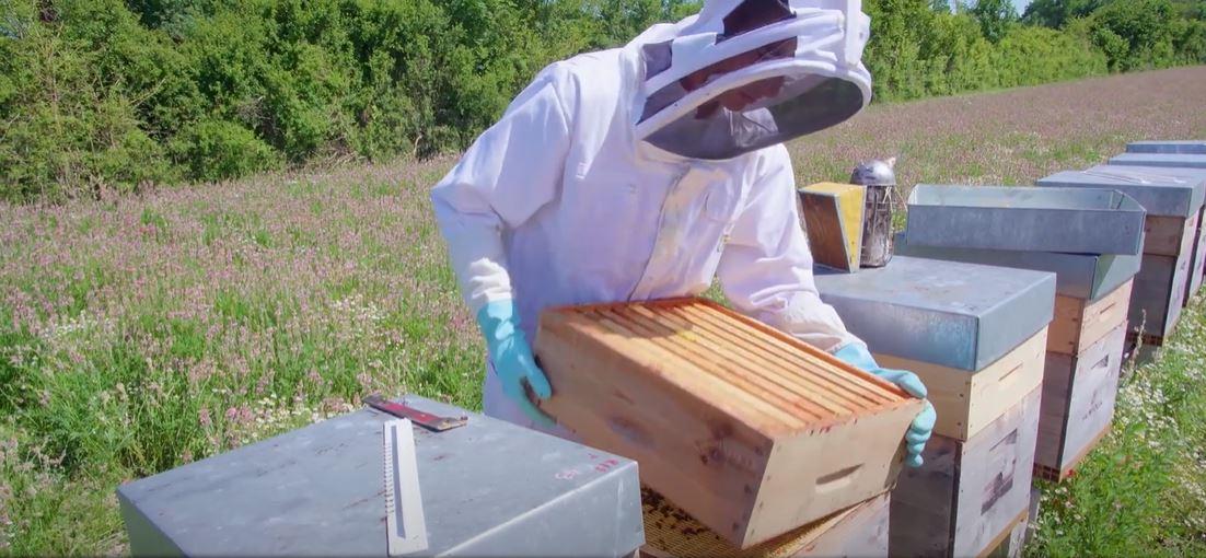 Visite sociétaire producteurs miel C'est qui le patron