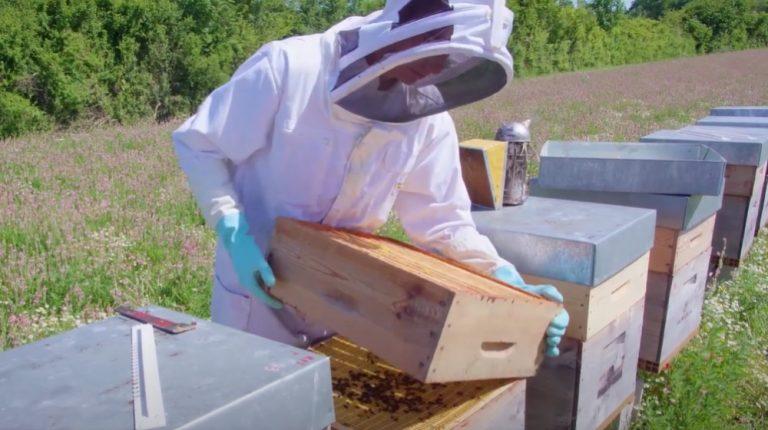 Producteur miel des consommateurs C'est qui le Patron