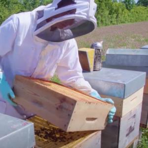 Producteur miel des consommateurs - C'est qui le patron